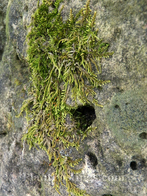 moss hideout