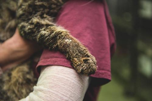 untouchable-cat-sarcoptic-mange-hugged-valentino-3-1