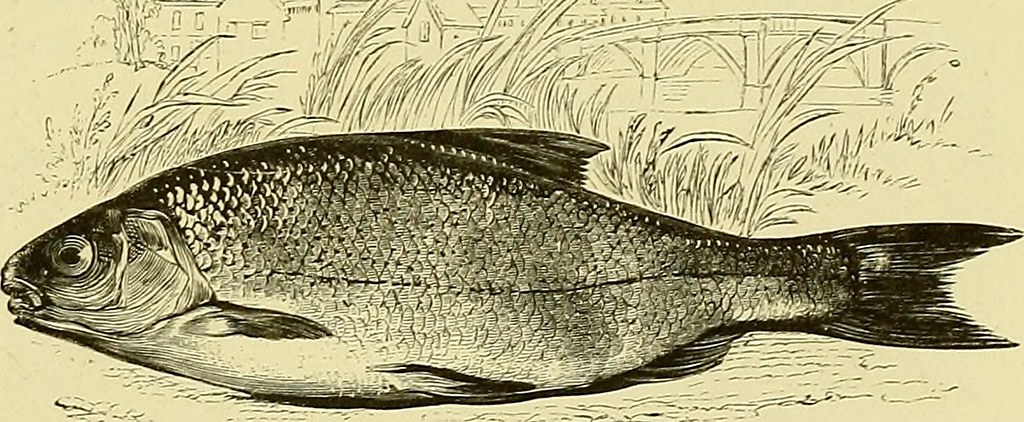 Image From Page 284 Of The Complete Angler Or The Contem Flickr