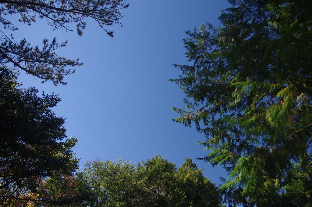 晴空 × 綠意