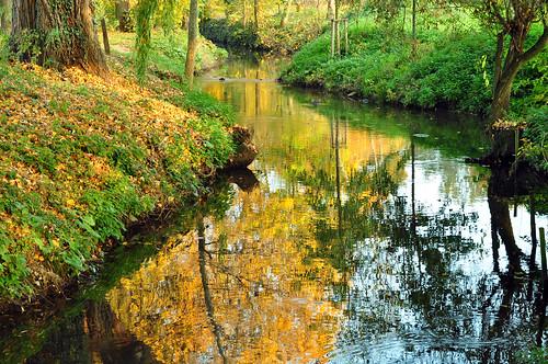 Ladenburg Kanzelbach Neckar münden Oktober 2015 Foto Brigitte Stolle