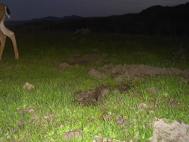 deer and burrowing owl