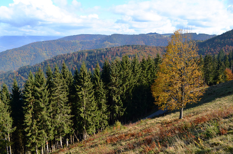 Walking to Kirchzarten, Black Forest, Germany