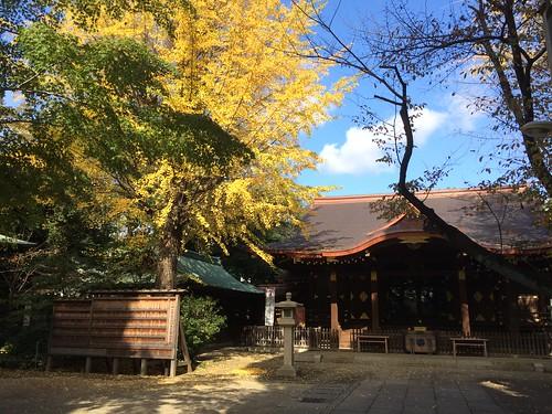 渋谷の氷川神社 2015.11.12
