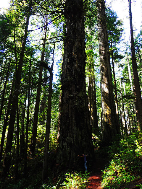 Prairie Creek Redwoods State Park, CA, USA