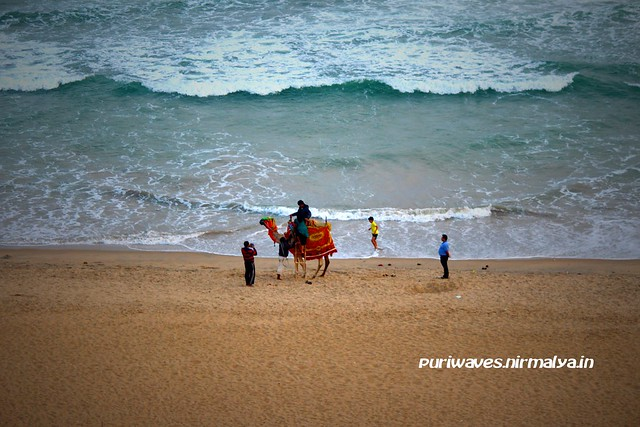 Camel Ride Fun – Golden Puri Beach