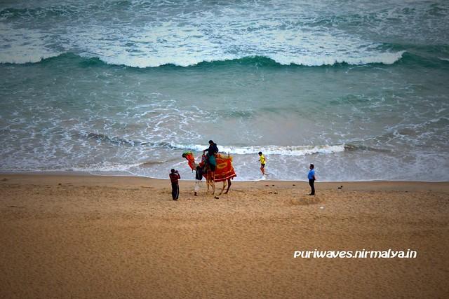 Camel Ride Fun – Golden Puri Beach