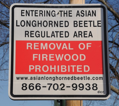 Road sign placed in Massachusetts banning the movement of firewood out of the ALB regulated area.