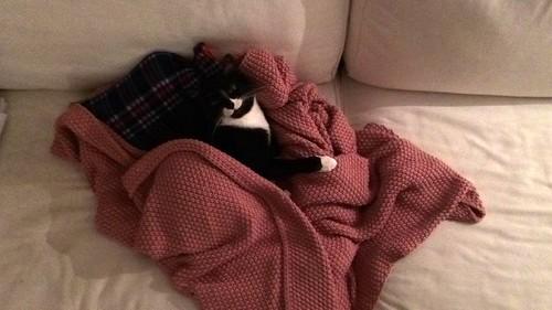 Gitana, gata blanquinegra dulce y tranquila esterilizada, nacida en Febrero´14, en adopción. Valencia. ADOPTADA. 30848236623_3904913c54