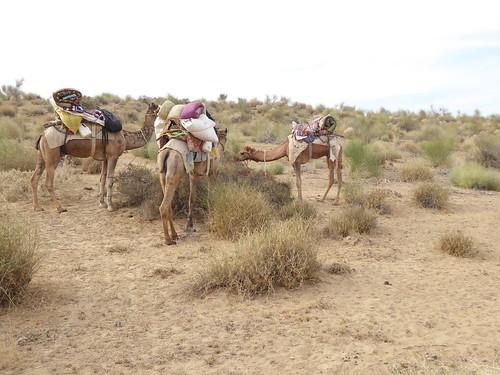 jaisalmer-jr 1-etape 3 - dunes (1)