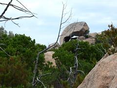Rocher caractéristique sur la trace NE de la crête de Ghjuncaghjola