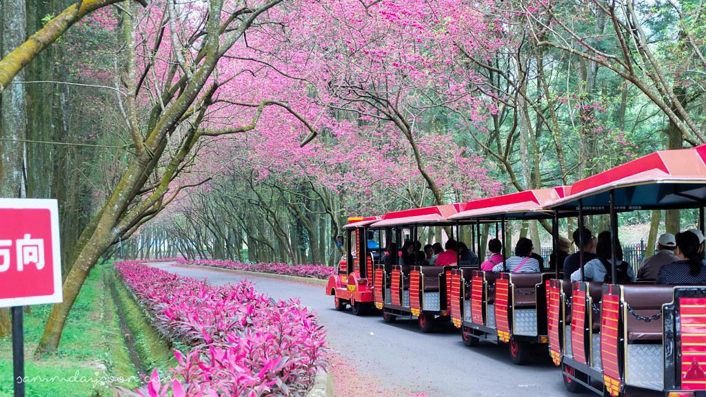 formosan-aboriginal-culture-village-train-cherry-blossom
