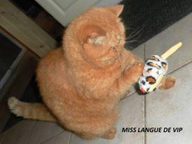 revue Petite souris à herbe à chat PET BRAND