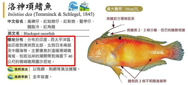 珊瑚礁魚種的辨識是依據棲地分布。圖片來源:臺灣常見經濟性水產動植物圖鑑;環境資訊中心後製