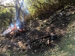 Brûlage de végétaux autour d'une carbonara