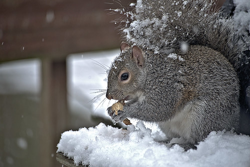 Snow and Squirrel | by John_Leu