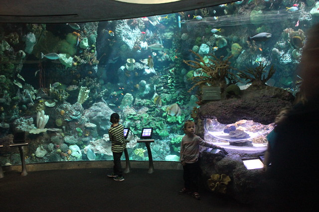 Shedd Aquarium Discount Day! - The Wandering Browns