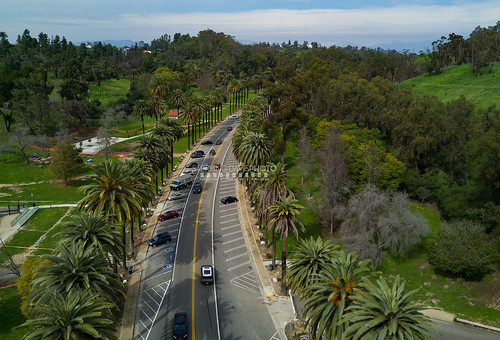 Elysian Park Palms