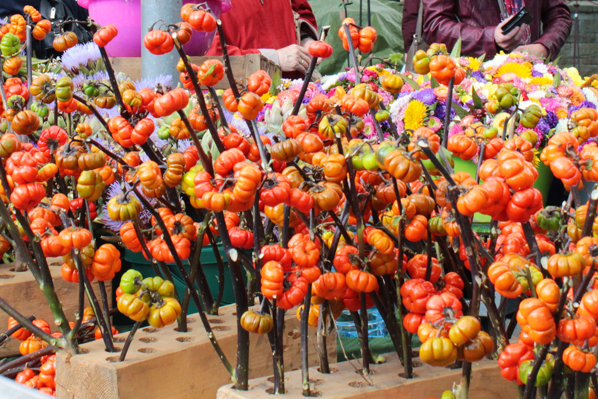 Rispentomaten auf dem Herbstmarkt im Westfalenpark