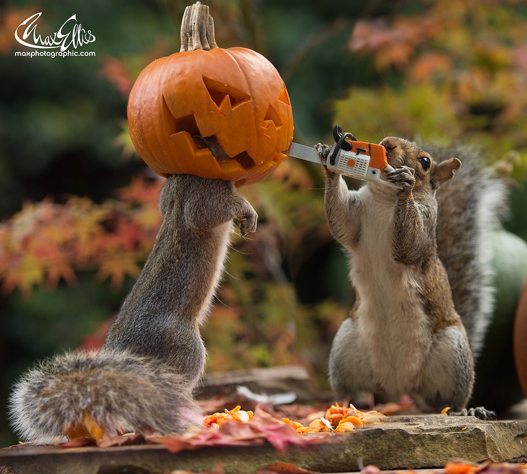 These are wild squirrels, it's not just photoshopped and y ...