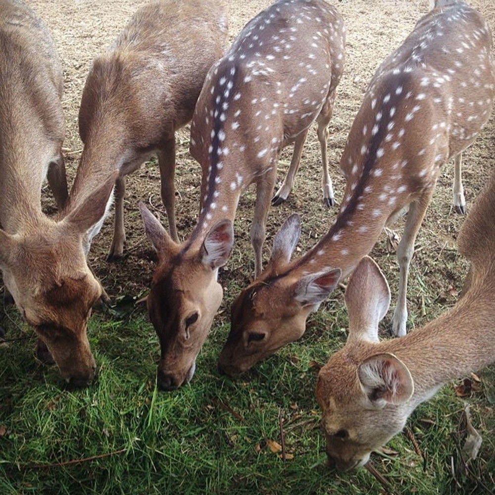 3-deer-via-ellafw