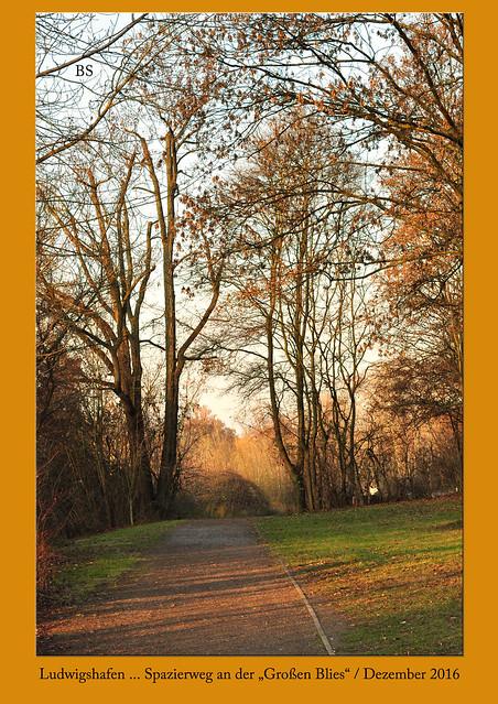 """Ludwigshafen-Mundenheim, Dezember 2016. Ein Spaziergang an der """"Großen Blies"""", Natur- und Landschaftsaufnahmen. Es ist ein schöner, sonniger Dezember-Nachmittag mit blauem Himmel und kühlen Temperaturen. Ich mag diese Parklandschaft mit den alten Trauerweiden und Pappeln. Der See, der Angler und (im Sommer) Badegäste anzieht, ist von einem Schilfgürtel umgeben. Zurzeit ist es hier eher menschenleer, angenehm still und sehr idyllisch. Warme Gelb- und Brauntöne herrschen vor - wunderschön! - Fotos: Brigitte Stolle 14. Dezember 2016"""