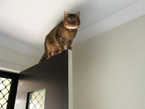 Seth on top of the front door