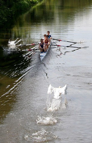 Row faster! | by C Ray Dancer