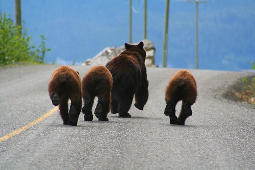 bear bums | by Jethro Taylor
