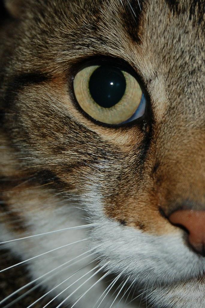 Cat S Eye En Streaming