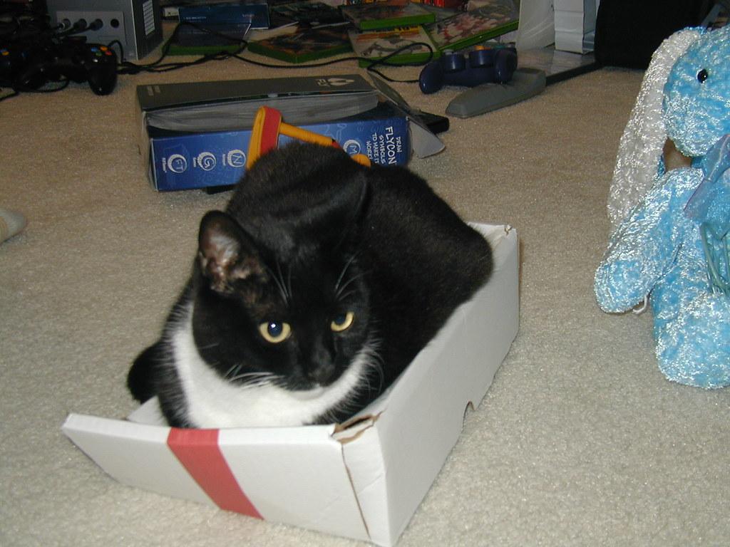 Free Cat Meow Mp Ringtone