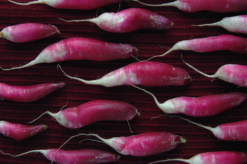 Radishes | by The Glass Eye