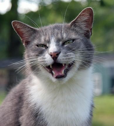 Cat Smile Funny Pics