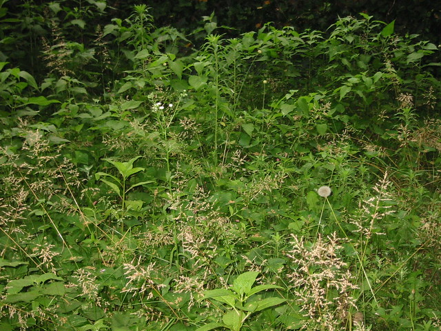 Wild Backyards : My wild backyard  Before any attempts to tame it My Apartm