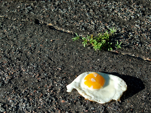 Hot enough to fry an egg | by Pockafwye