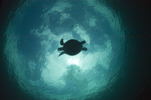 turtle silhouette | by gerb