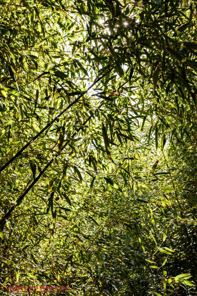 Cheekwood Botanical Garden & Museum of Art - October 11, 2… | Flickr