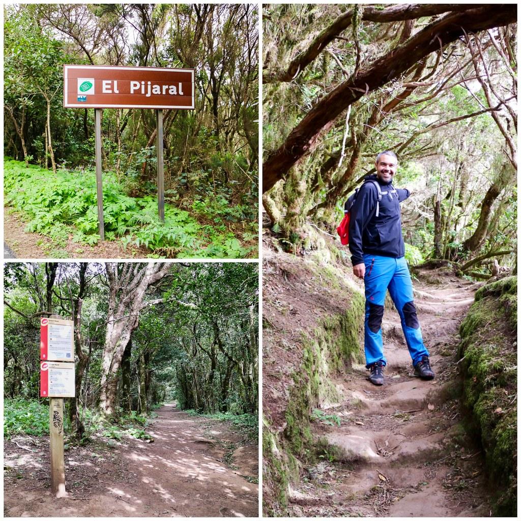 Excursion a El Pijaral, Bosque Encantado