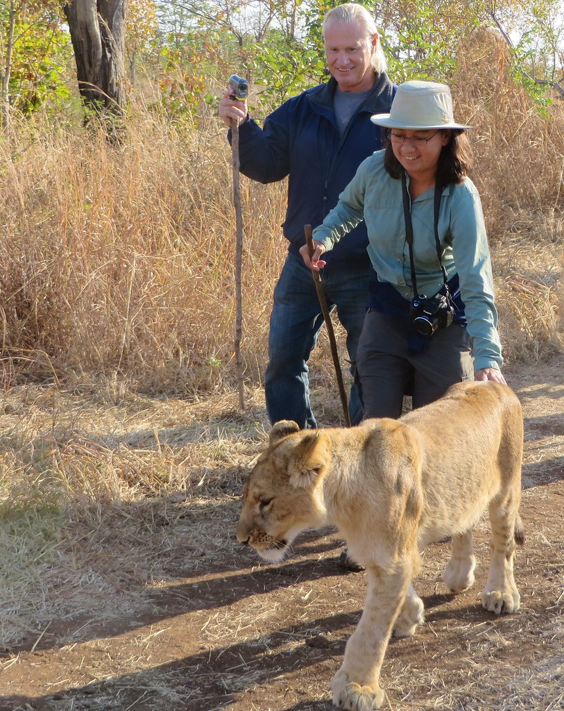 Bill and Maya experiencing the Lion Encounter in Victoria Falls, Zimbabwe