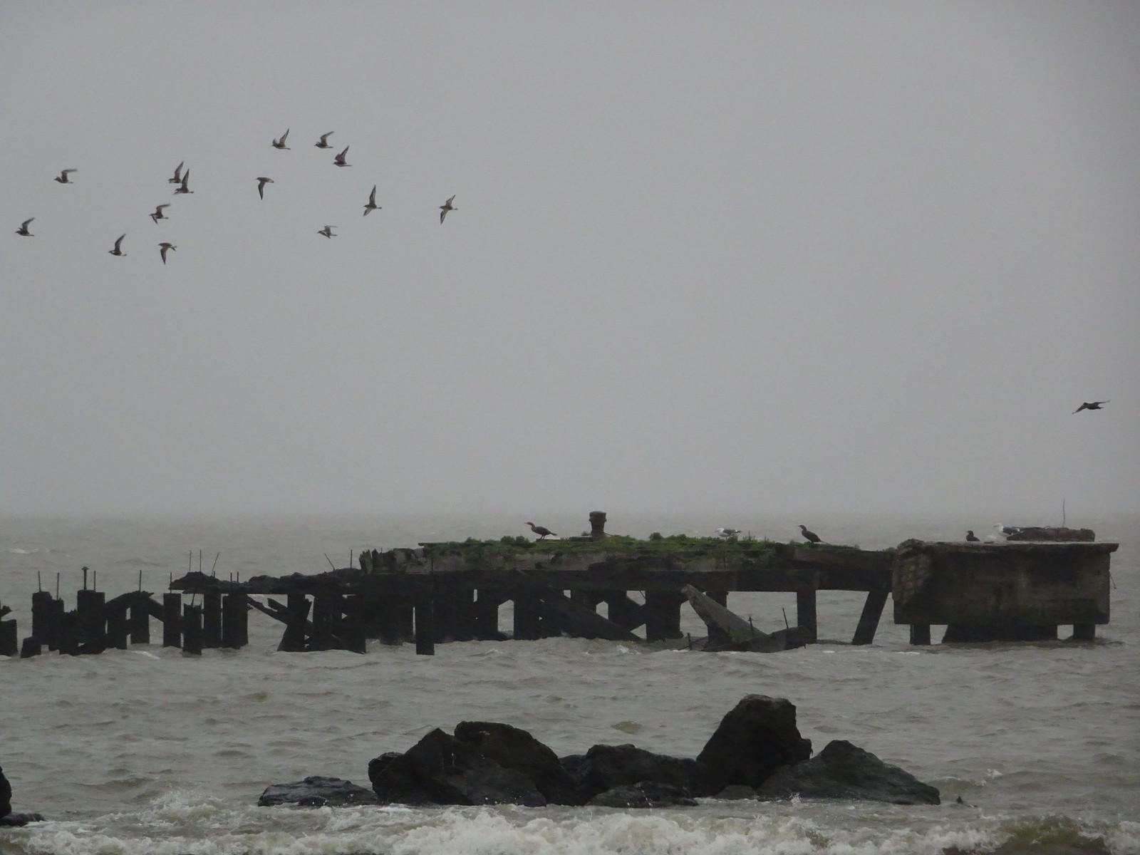 More wet #birds in the #rain #berkeley   by buzmurdockgeotag
