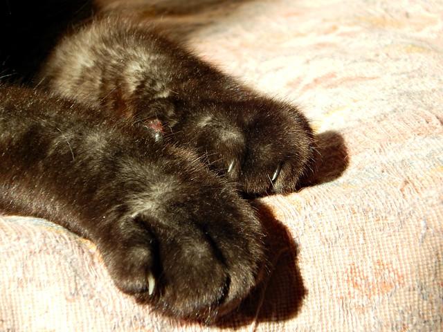 Мусины лапы | cat paws