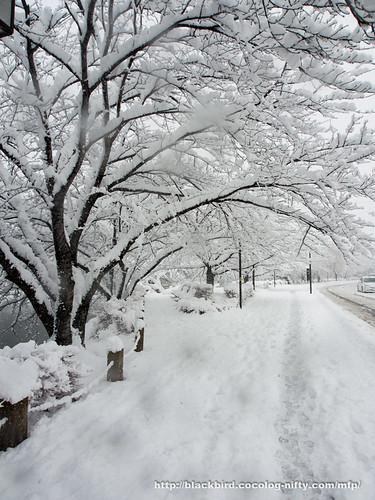 Snowday 1 #06