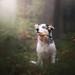 Forrest puppy