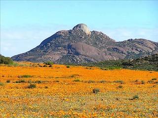 Chili Atacama le desert des fleurs