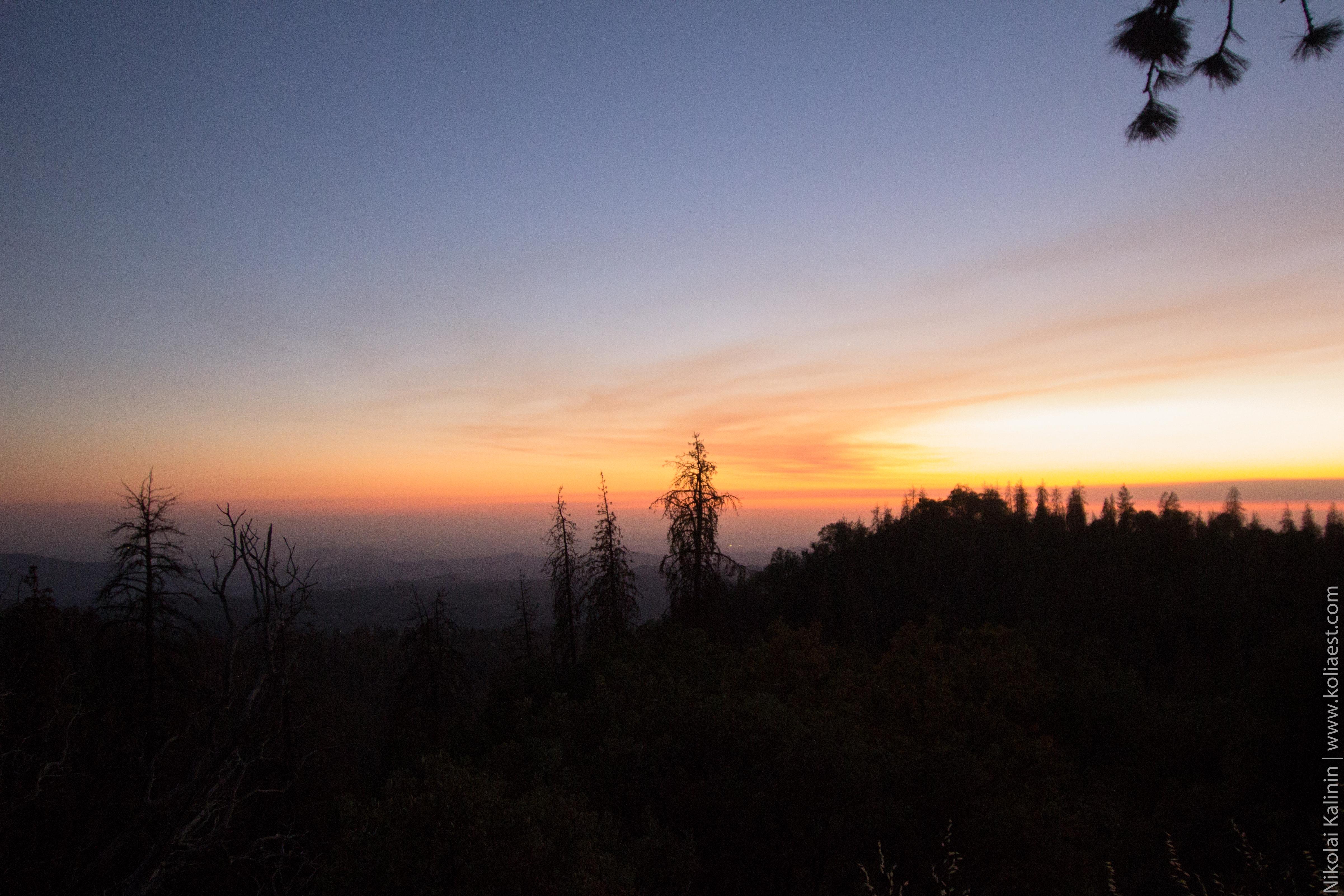 Sequoia-98