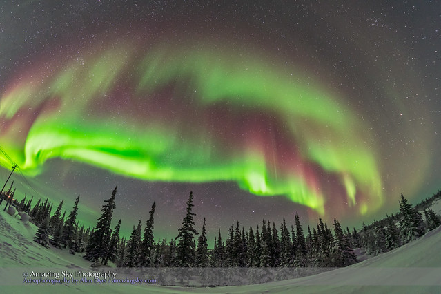 Auroral Arcs over Boreal Forest #1
