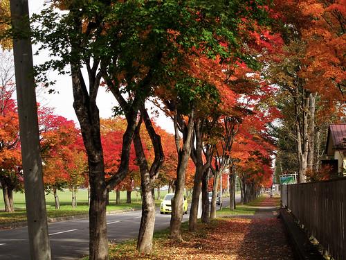 緑ヶ丘公園(帯広市)