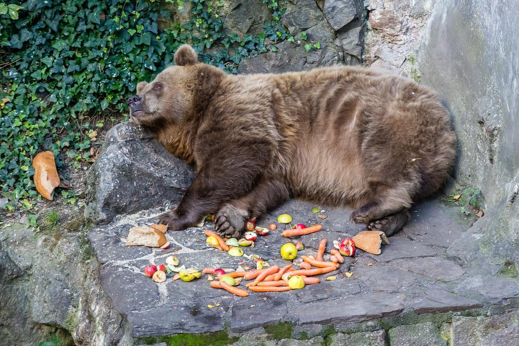 Guarding Bear