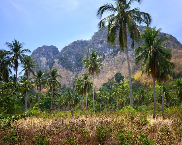 Selva de palmeras de la isla de Poda