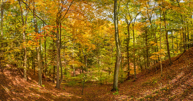 Fall in the Woods, Forest in the Fall, Autumn Leaves, Fall Colors, Autumn Woodland